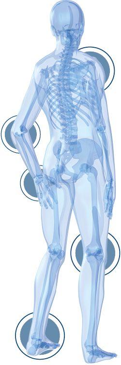 flexofytol szkielet